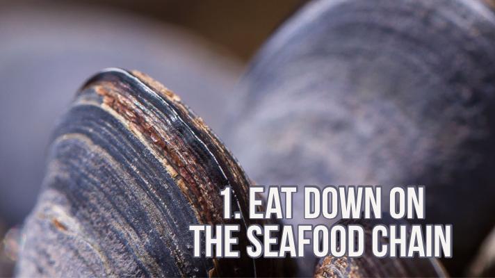 mussels clean the ocean water